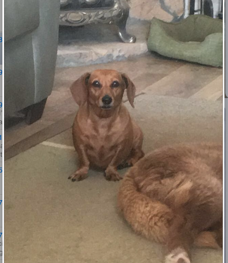 Lucy has gone missing from Reeves Rd. near Bush Dairy Rd. She's a 9 year old miniature dachshund. Please help her find her way home, reward offered. Please contact Rachel at 601-433-2301 or email erinvhowell@gmail.com